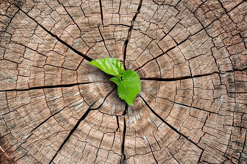 Economia circolare del legno